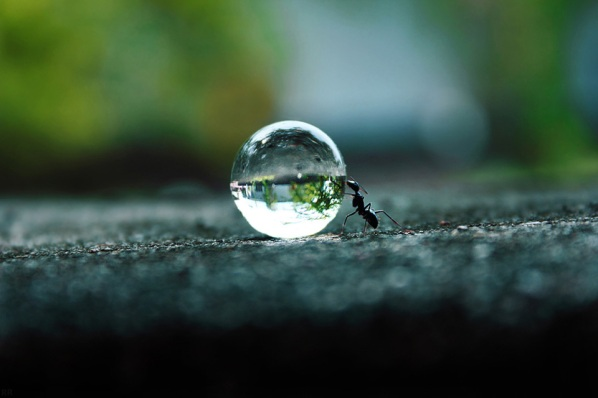 ant-pushing-a-water-droplet